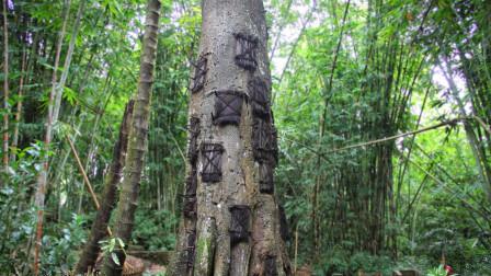 """印尼最古老的""""树葬""""仪式,被葬进大树里的人,竟然全部是婴儿!"""