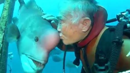 鱼的记忆远不止7秒,老人20年前救下的鱼,再次相逢画面感人