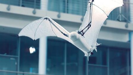 国外发明仿生蝙蝠,这才是真正的黑科技,做的跟真的似的!