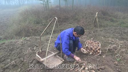 我是黄小妹: 王幺爷地里干活, 黄小妹负责做美食, 老两口生活很平淡