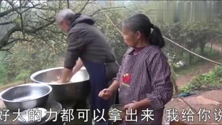 农村王四:老妈想弄芭蕉干,老爸去地里砍了一根,准备回来做美食!