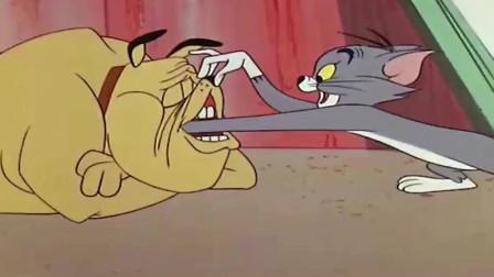 杰瑞钻入大狗嘴中避难,而汤姆则倒了大霉,太逗了