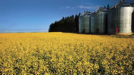 农产品出口量大跌,白宫称爱莫能助,加拿大:希望东方重新接纳