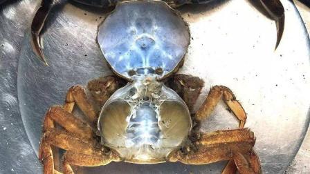 螃蟹一生要脱壳30次?赶上脱壳时吃都不用剥壳,真是太爽了