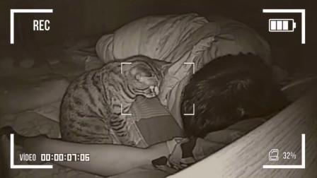 主人长期和猫一起睡觉,有一天查看监控,发现了诡异的画面