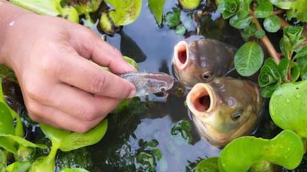 小伙用小鱼钓大鱼,没想到大鱼瞬间上钩,太不可思议了
