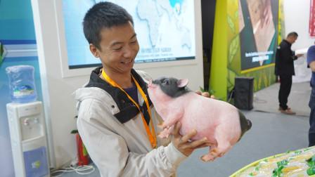 华农兄弟:受邀参加第十七届中国国际农产品交易会,很多好吃的,带大家看一下