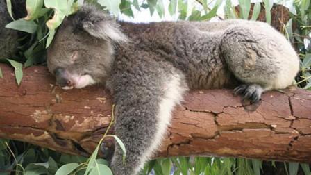 活得最憋屈的动物,排泄排到一半突然死亡,原因让人哭笑不得!