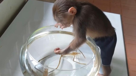 主人买大虾逗小猴子,下一秒请憋住别笑,镜头拍下全过程