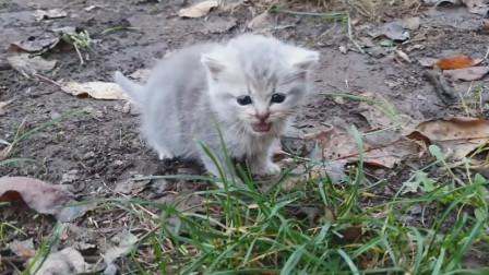 公园的流浪小奶猫被女子收养,女子举动非常有爱,画面令人暖心