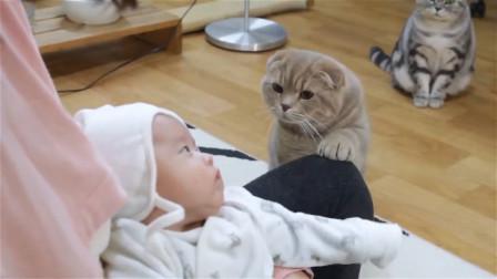 小主人出生后,猫咪是操碎了心,看完你还想养猫吗?