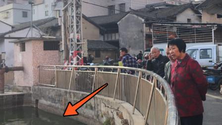 """广东农村一鱼塘出现大量""""怪鱼"""",到底什么现象?"""