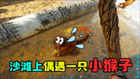 方舟:生存进化:沙滩上偶遇一只小猴子,对于这里来说真是稀有物种