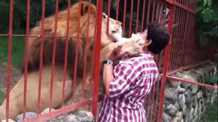 女子不断拍打狮子笼,不料狮子直接抱住女子的头,下一秒意外发生
