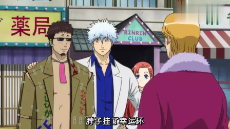 银魂:近藤应征当牛郎,银时让阿妙姐也去当牛郎,不要命了?