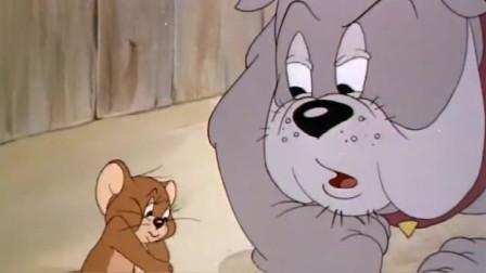 猫和老鼠:杰瑞吹起口哨,吓得汤姆立马写好遗嘱,大狗却出问题