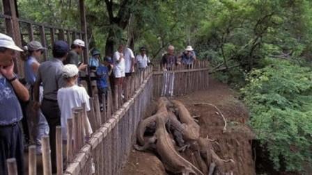 """村庄惊现""""奇特爬行动物"""",引众人围观,专家一看却立即让人撤离"""