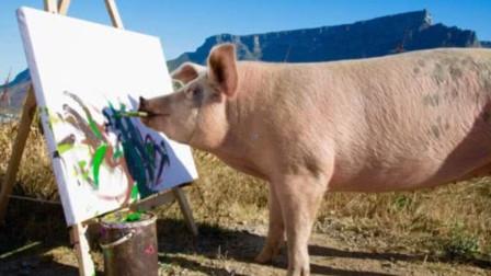 有艺术细胞的猪,随便画一幅就能卖3万,一夜之间走上猪生巅峰!