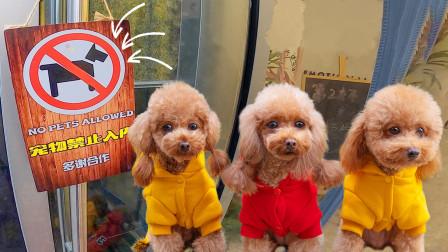 3只狗狗被奶茶店拒之门外,和铲屎官只分开1分钟,但是却快急哭了!