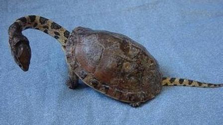男子在河边捡到一只奇怪的乌龟,数月后,发现不对劲赶紧报警!