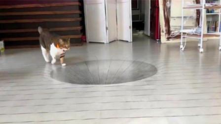 老外在地上画3D大坑,猫咪走过来后!才是精彩的开始