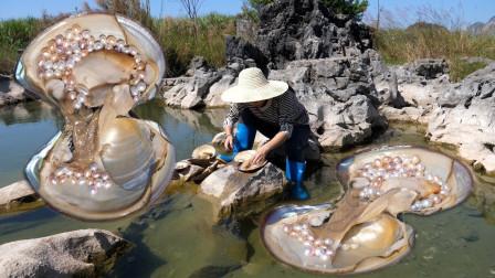女子在荷塘里捞出几只大河蚌,不料竟有意外惊喜,这下赚到了!