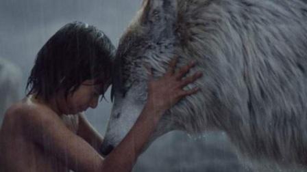 为何狼遇到人类婴儿,会选择养大而不是吃掉?看完涨知识了!