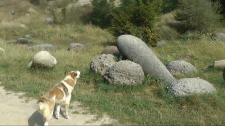 小村庄出现奇怪石头,喝水就长大还能自己动,专家解释不了原因!