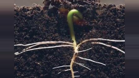 看一粒种子怎么破土而出,生命就是如此奇妙