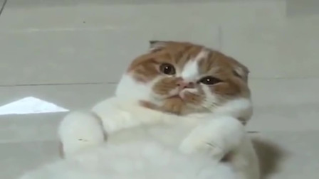 猫咪睡觉被吵醒,下一秒这表情,好像是在骂我?