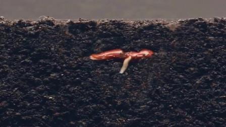 牛人创意:看一粒种子怎么破土而出,生命就是如此奇妙