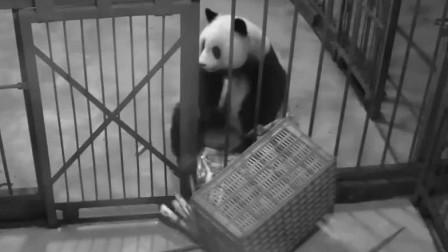 熊猫滚滚的深夜食堂,只有美食才是真正的解药!