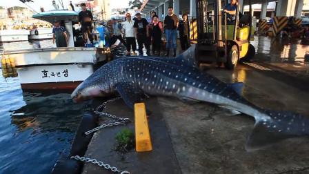 鲸鲨不小心跳到岸上,吓坏了众人,鲸鲨:都别动,我自己下去