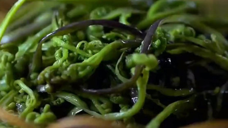 舌尖上的中国 史前恐龙的主食,现成为我们餐桌上常见的美食!