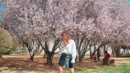 点击观看《春天的味道!超美樱花 《apink - %%》太阳当空照NANA现代舞视频》
