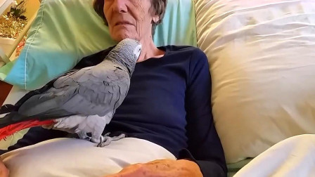 """主人临死,最后一次对鹦鹉说""""再见"""",它的回应让全世界看哭了!"""