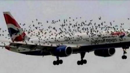 美国又遭物种入侵,飞机见了不敢飞,中国吃货:煲汤特好喝