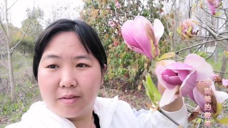 上海:绿化园里这种花,即漂亮又可食用,女性朋友可以摘几朵,可缓解痛经