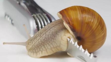 """牛人把蜗牛放在""""刀片""""上爬行,下一秒意外发生了!"""