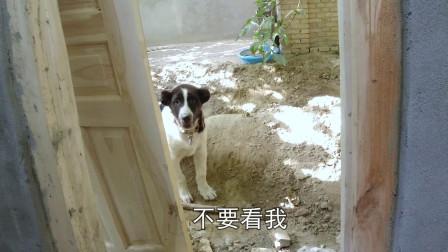 家住沙漠边停水咋上厕所?南疆姑娘解决三急,家里的狗狗都来围观