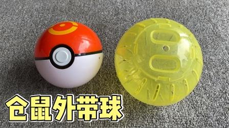 主人吐槽小仓鼠外带精灵球和跑球哪个好用?