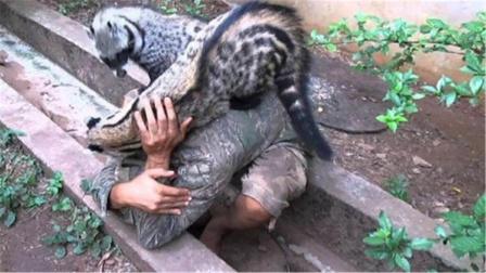 被中国人当宠物,在澳洲却成了危害一方的野兽,镜头拍下残忍画面