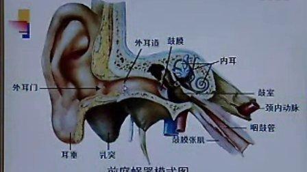 足部关节解剖结构
