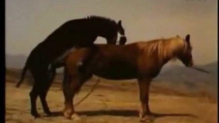 动物世界性行为性爱交配驴与马杂交长颈鹿牛