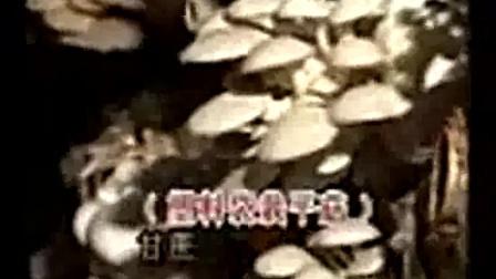 食用菌栽培技术的具体内容_食用菌的立体高产栽培技术_高清视频食用菌shiyongjun
