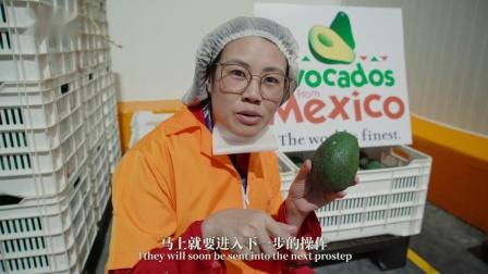 牛油果还能做菜?看看墨西哥原产地的美食大揭