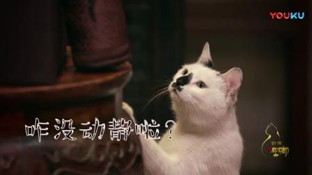 猫听到从未听到的声音是什么反应?太好笑了