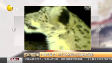 30年来首次!  四川卧龙保护区拍到金钱豹 第一时间 180728