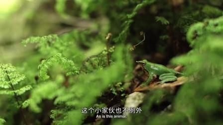 """�h山 被�_��文�l�F的奇特生物:�_��文蛙�_��""""��娃""""新境界"""