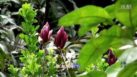 十八姑娘一朵花(纪念凤飞飞紫玉兰版)